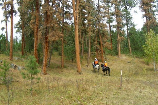 11-into-the-treesF4F59069-C6DA-2666-6828-9E43B9CAD2CD.JPG