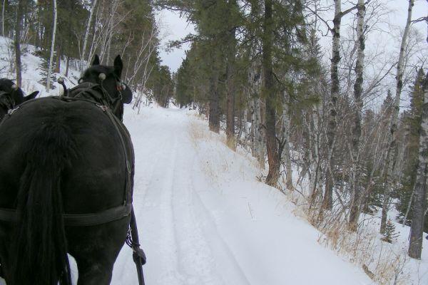 the-trail-aheadBAB457DA-BA6A-BB7F-16E2-CCDD73429B22.jpg